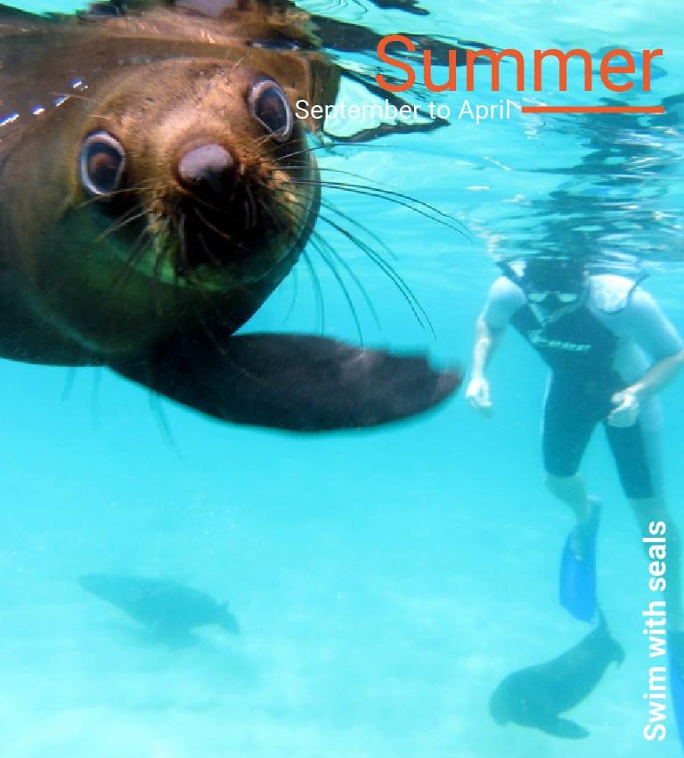 snorkel with Cape fur seals in Plettenberg Bay